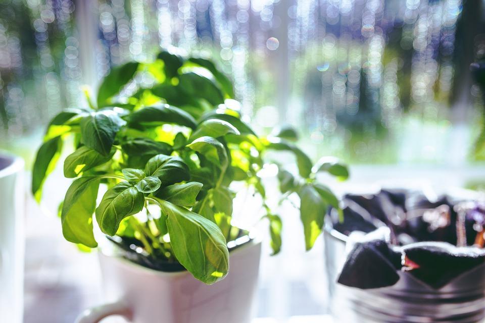 Päť druhov byliniek, ktoré by mal doma pestovať každý