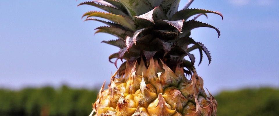 Milujete ananás? Vypestujte si ho doma
