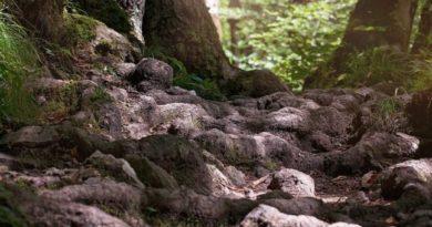 Stavte na koreňové čističky a čistiarne odpadových vôd