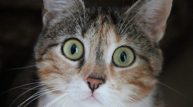 jak poznat, že je kočka nemocná