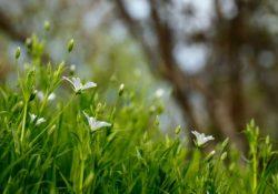 Nech trávnik prečká zimu alebo ako ho na zimu pripraviť