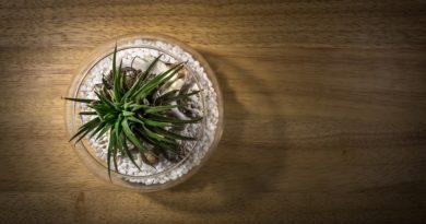Viete, aké rastliny vyčistí vzduch?