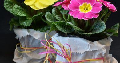 Typicky jarné kvety, ktorými rozžiarite okenné parapety