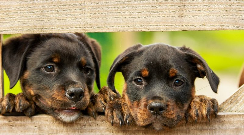 Aká ochorenia trápia psie miláčikov najčastejšie?