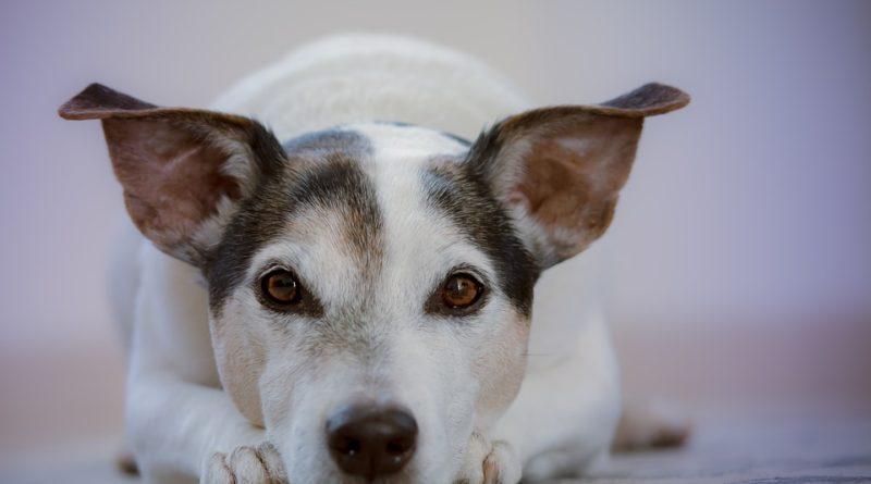Najbežnejšie psie choroby. Netrpia niektorú z nich aj váš maznáčik?