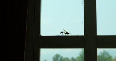 Urobte prietrž hmyzu aj ostrému slnku. Moderné riešenia do vašich okien