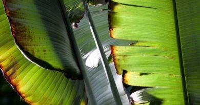 Tipy na izbové rastliny, ktoré toho veľa nepotrebujú aneb niečo pre leňochov