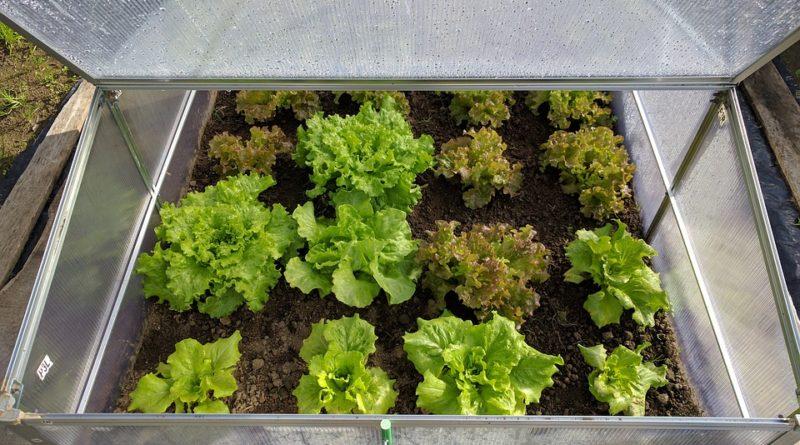 Aj na jeseň si Vypestujte v skleníku čerstvú zeleninu