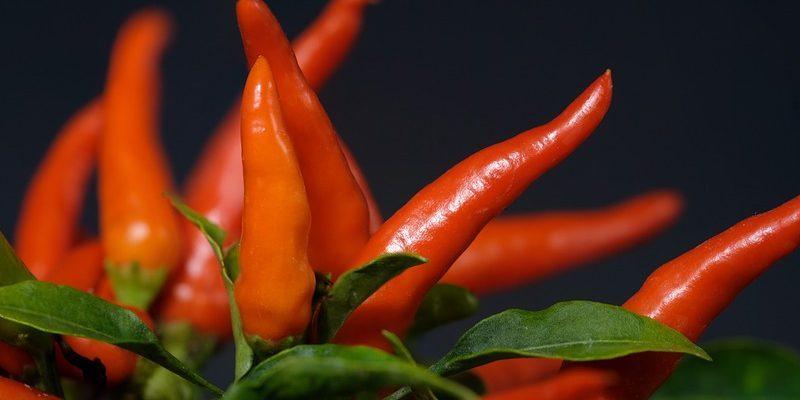 Ako na pestovanie chilli papričiek