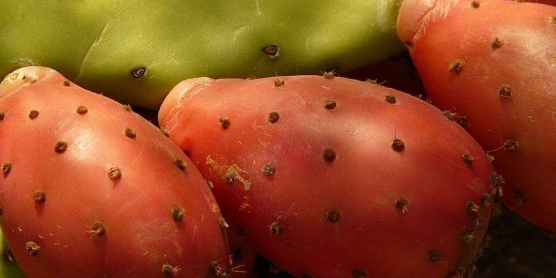 Poznáte kaktusové figy? Ich vplyv na zdravie je veľmi zaujímavý