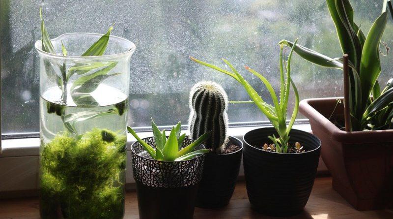 Máte domácich miláčikov? Voľte neškodné izbové rastliny do interiéru