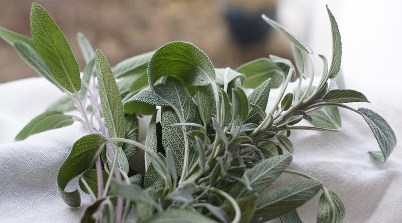 Naučte sa používať bylinky. Aké predovšetkým?