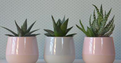 Izbové rastliny, ktoré zvládnu aj starostlivosť začiatočníkov